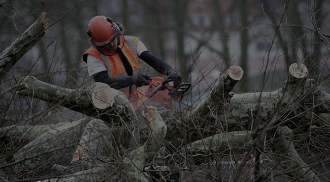 El Prado Tree Service